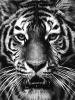 Longo, Robert