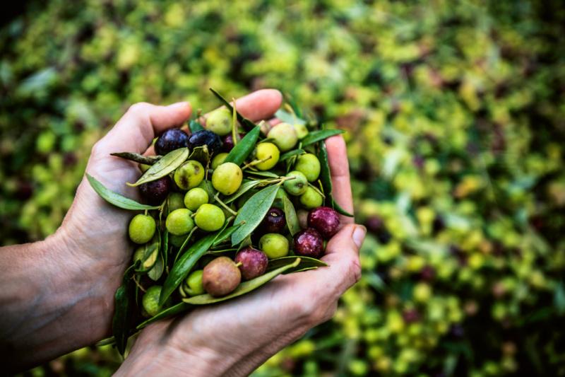 Hände voll Oliven